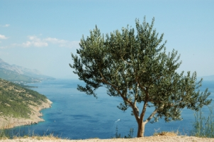 Olive Leaf Extract from the Mediterranean